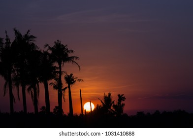 sunset and sugar palm tree