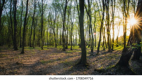 Sunset in summer forest, beautiful sun light in green summer wood, path in wild forest with green grass and flowers background