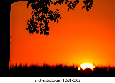 sunset in summertime with tree