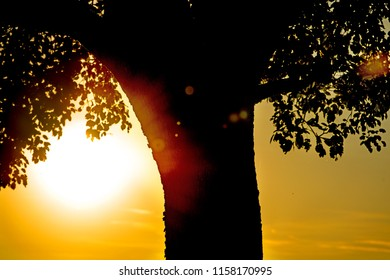 sunset in summertime with tree foliage