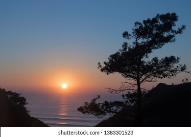 Sunset with the sun just above the horizon of the Pacific Ocean with its reflections off the water framed by the historic Torrey Pine Trees in the Torrey Pines State Preserve in San Diego, California.