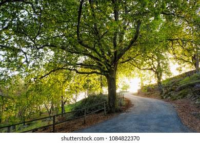 sunset sunlight over green forest spring summer