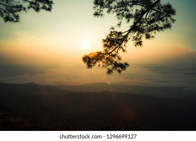 sunset or sunrise beautiful warm sky on top view hill mountain cliff and branch pine tree landscape with fog mist
