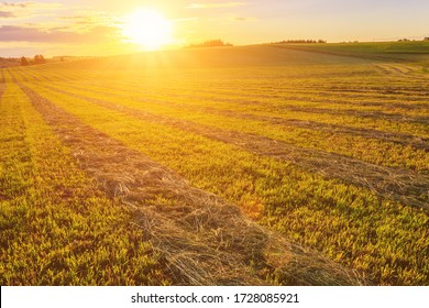 Sunset or sunrise at cultivated land in the countryside on a summer evening with blue sky background. Landscape.