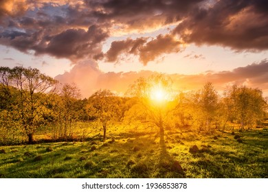 Sunset or sunrise in a spring field with green grass, willow trees and cloudy sky. Sunbeams making their way through the clouds.