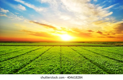 Sunset, sunrise, sun over rural countryside wheat field. Late spring, early summer