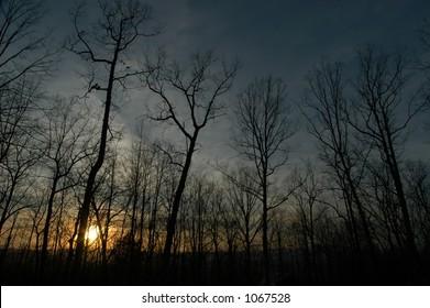 Sunset or Sunrise Trees