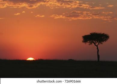Sunset in Tarangiri National Park, Tanzania, East Africa
