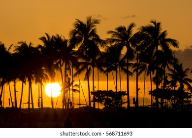 Sunset through the coconut trees