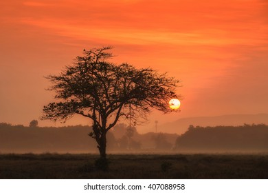 Sunset through an oak tree on field.