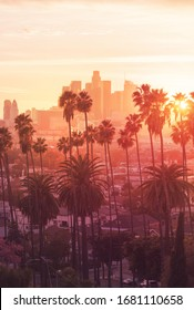 Sunset through the palm trees, Los Angeles, California.