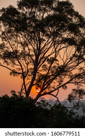 Sunset through smoke haze with gum tree silhouette in Victoria, Australia