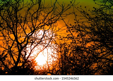 Sunset through tree branches without leaves. Horror or fear concept image. Forest woods in back light of dusk time