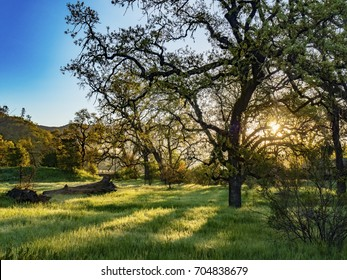 Sunset Through Trees in a Meadow in Napa Valley, California, USA