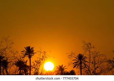 sunset time in Marrakech palm, Morocco