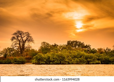 Sunset at Toubakouta, river bank with mangroves and baobab.