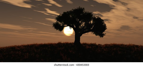 sunset and tree, 3d rendering