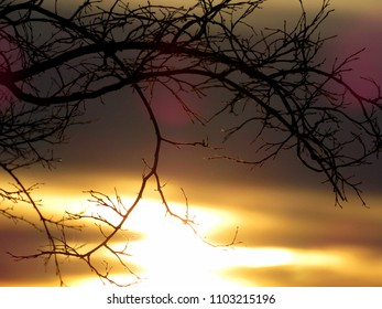 Sunset Tree Branches