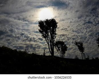 sunset tree cloud silhouette