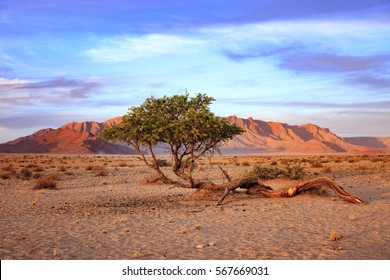 Sunset and tree in the desert Namibia