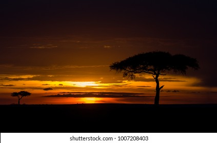 Sunset with tree in Masai Mara Game Reserve, Kenya