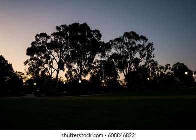 Sunset tree silhouette.
