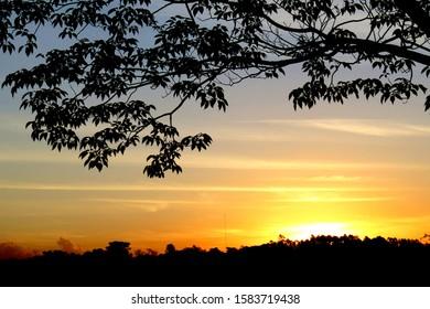 Sunset and tree silhouette in Foz do Iguaçu