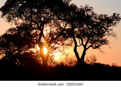 Sunset Trees