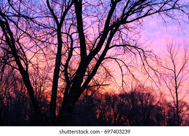 sunset, trees sunset, colorful, beauty, nature, pink sunset, purple sunset, wallpaper, texture, background