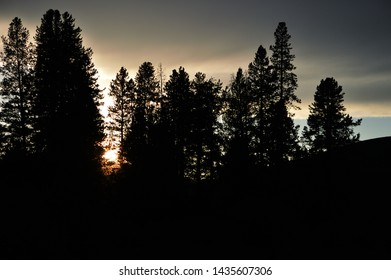 Sunset and trees forest silhouette with grey clouds.