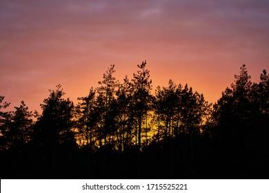 Sunset with trees in Puszcza Biała