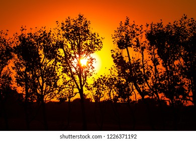 Sunset Trees Silhouette