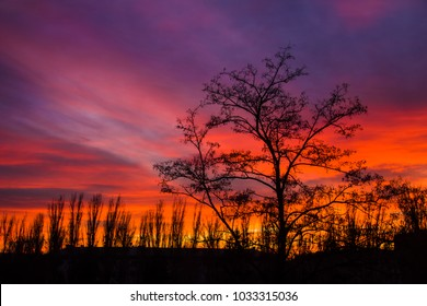 Sunset trees silhouette background. Red and purple sky. Beautiful clouds on amazing color landscape.