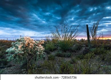 Sunset at Tucson Mountain Park near Gilbert Ray Campground, Arizona, USA