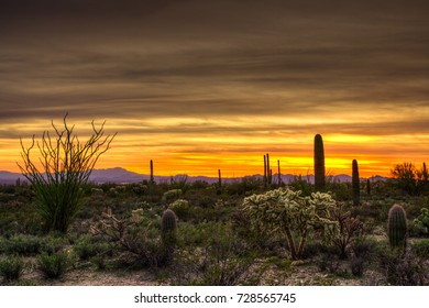 Sunset at Tucson Mountain Park near Gilbert Ray Campground, Arizona, USA