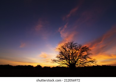 sunset, the twilight light trees.
