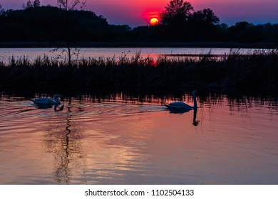 Sunset and two swans