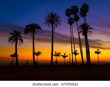 A sunset view of a cluster of very tall palm trees in a park against a sunset sky along the southern Californian coastline at Santa Monica in the USA