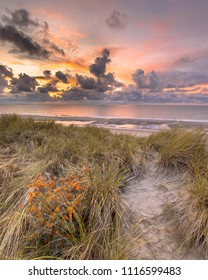 Sunset View from dune over North Sea and Canal witch common sea buckthorn (Hippophae rhamnoides) in foreground in Zeeland, Netherlands