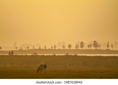 Sunset view of a Dutch polder with silhouettes of cyclists and cow in Zoetermeer, The Netherlands