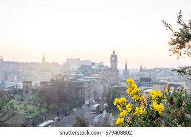 Sunset view of Edinburgh city, taken from Calton Hill. United Kingdom. With Flowers on foreground.