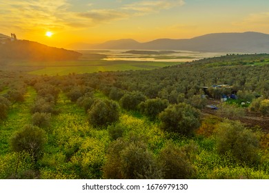 Sunset view of landscape and countryside in winter, the Netofa Valley, the Galilee, Israel
