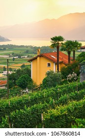 Sunset view of rural Southern Switzerland with houses, farms, vineyards, alps mountains and Lake Maggiore