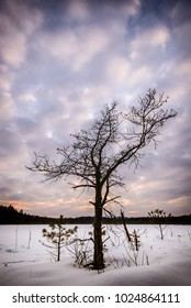 Sunset view of small trees in winter near the frozen lake