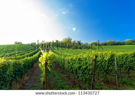 Sunset in a vineyard in Hesse Germany