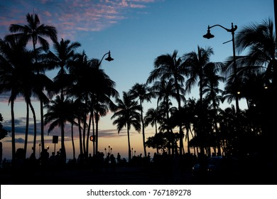 Sunset Waikiki Beach with coconut tree