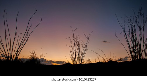 Sunset in the west Texas badlands with ocotillo silhouettes.
