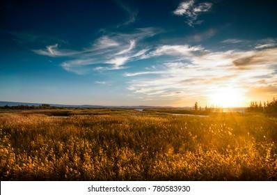 sunset at wetland