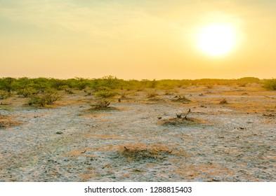 sunset in Wild Ass sanctuary, Little Rann of Kutch, Gujarat, India