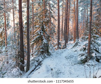 Sunset in winter forest finland